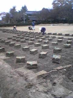 Sod Farming in Tsukuba