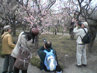 Plum Blossoms at Kairakuen