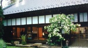 Kousa dogwood (yamaboshi) in Tsukuba
