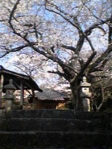 Kishibojin in Hojo in Spring