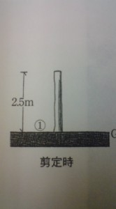 How To Prune A Zelkova (keyaki) According To Japanese Textbooks