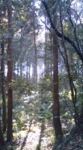 Nakane Konda-Dai (Kamisakai) Woods