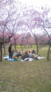 Peach Blossom Party In Koga