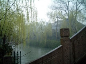 Willows in China