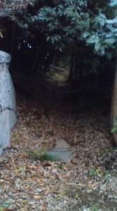 The Old Moat Around Nichirinji