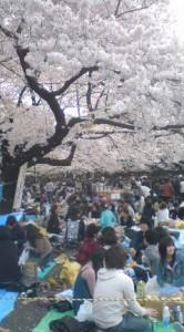 Hanami at Ueno Park- April 5, 2009