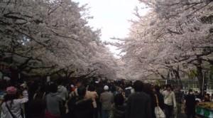 Ueno Park- April 5, 2009