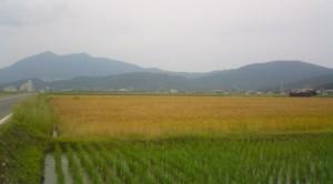 BAKUSHU ( 麦秋 ) in Tsukuba