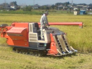 Harvesting Rice In Tsukuba 2009
