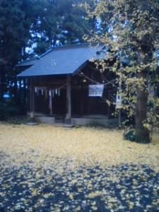 Fallen gingko leaves at a small Kashima Shrine, Shimo-hiratsuka, Tsukuba 2009