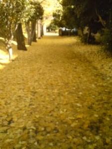 A path in Tsukuba`s Matsushiro goes GOLD