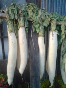 Drying Daikon in the Sun- Hitachi Omiya 2009