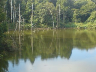 Deep forest behind the pond