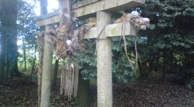 The curious straw snake which can always be seen hanging atop the torii gate at Teshirogi`s O-Washi Shrine in Tsukuba