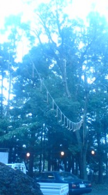 The Tachibana Fireworks are suspended from a rope strung up between trees at Tsukuba`s O-Washi Jinja Shrine in Teshirogi