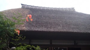 No-zenkazura in front of one of Tsukuba`s most beautiful houses (July 21st 2012- Saiki, Tsukuba)