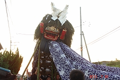 At the Gion Sai Festival in Oda, Tsukuba this large SHISHI (獅子) is used to represent the mythological beast YAMATA OROCHI. At the climax of the event it can be seen  battling its nemesis, the deity SUSANOO NO MIKOTO, who is born in  a portable shrine ( OMIKOSHI