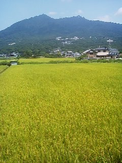 Soon the scenery opens up these rice fields which were divided up and parcelled out in the 7th century as part of the Jo-Ri (条理) project implmented by the central government to organize the nation and facilitate tax collection