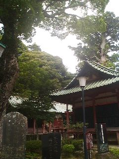 To the right of the Shrine`s large Main Hall are these three smaller shrines which were built in the 17th century by Iemitsu ( the 3rd Tokugawa Shogun) on the temple grounds. The large tree on the left is a rare mutant variey of camphor tree