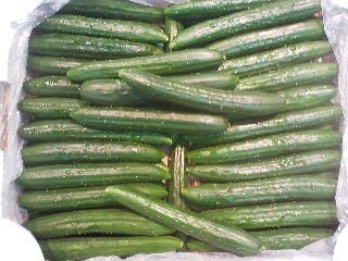 A box of bumpy Ibaraki Prefecture grown cucumbers on sale at a Tsukuba supermarket. Cucumbers (Kyuri in Japanese) have a higher percentage of water content than almost any fruit or vegetable (more than 95%) and are eaten in Japan during the hot months to relieve thirst and cool the body down.
