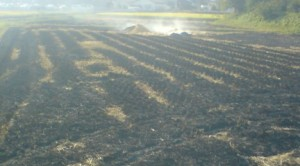 Many farmers burn their fields after the harvest- to kill insects and cover the soil with nutritious ash. This can make September a smokey month in Japan!
