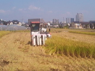 The last of the harvest- with Tsukuba Center looming in the background a couple of KM away (September 16th 2014)