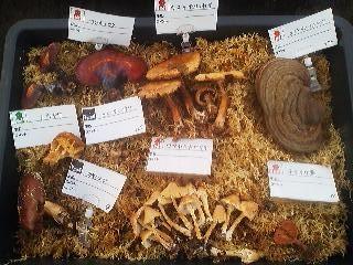 A tray of mushroom at the Tsukuba Botanical Garden 2013