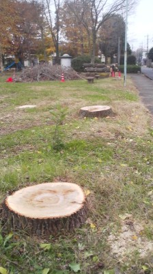 Walking over to your local park and finding only stumps where familiar trees once stood can be a traumatic experience when there is no previous notice give by the city office