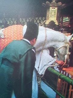 One of the Kashima Grand Shrines sacre BLUE horses