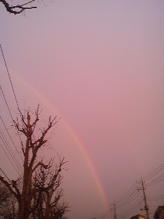 Beyond the clipped trees- a rainbow (Matsushiro, Tsukuba 2014)