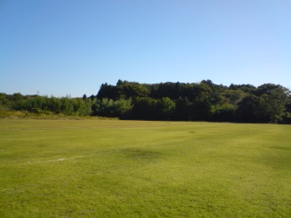 A turf-grass field in summer- you can see how tempting it is to go out and have a catch on it!