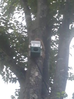 July 2014- After years of research, the Tsukuba City Office, in collabortion with ornithologists have finally ornithologists, have finally found the perfect way of keeping the starlings away from Tsukuba Center- this single tiny loudspeaker up in a tree.