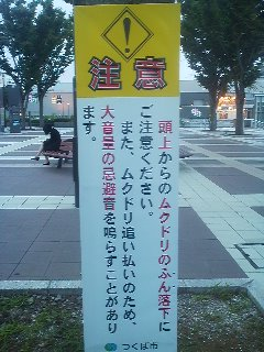 July 2014- A sign at Tsukuba Center reads: Beware of falling bird droppings- and please note that distress calls will be broadcast to keep starlings away