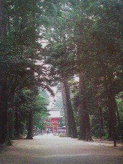 Kashima Shrine`s magnificently solemn sacred grove is designated an Important Natural Asset of Ibaraki Prefecture, though what remains of it now is a mere shadow of what it was like in centuries past.