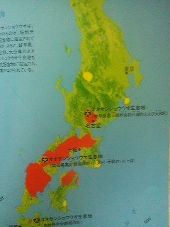 The orange areas on this map of Honshu and Shikoku indicate the current natural range of the Japanese giant salamander