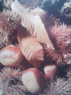 A part of the diet of this archipelago`s ancient inhabitants (as evidenced by the archaelogical record) chestnuts- their taste, their shape and their color evoke the autumn season for the Japanese who traditionally try to eat KURI GOHAN (chestnut rice) at least once every fall