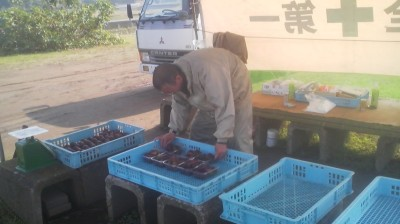 The farmers at the roadside stall only pick the ripest figs each morning- if you don`t get there early they`ll be sold out!