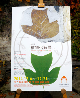 The poster for the  Plant Fossil Exhibition features a pair of tulip tee leaves- one real and one fossilized
