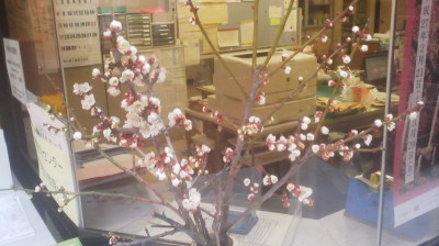 An arrangement of plum sprigs in bloom at the Oho Community Center in Tsukuba