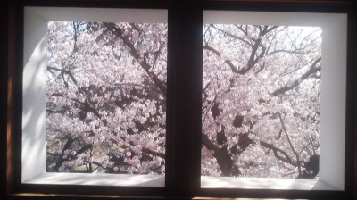 Cherry blossoms in full-bloom seen through a window in one of the towers of old Tsuchiura Castle in Tsuchiura