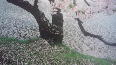 falling cherry-blossoms