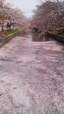 Cherry Rafts