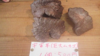 Something really unusual ! Giant, curiously-shaped MUKAGO on sale at a farmers market stall in Tsukuba