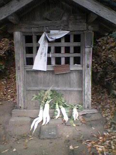 Futamata daikon at a roadside shrine in Konda, Tsukuba