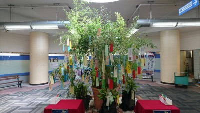 Tanabata decorations at  Tsukuba Center (near Shakey`s Pizza) 2016
