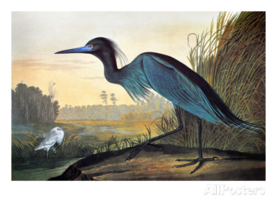 One thing that struck me was how similar the work of the great French-American bird painter John Audubon  (born 1785) was to that of Odano! I uploaded this pic so you could compare!