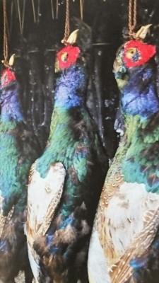 Pheasants offered to the deity of the Suwa Taisha Shrine in Nagano Prefecture