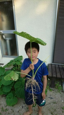 One of the neighborhood kids shading under a fuki (Japanese butterbur) leaf.
