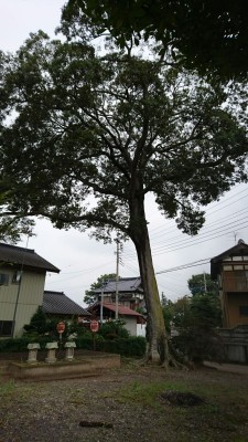 A large hackberry tree stands in the center of the village