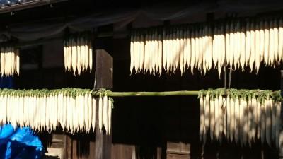 Karima, Tsukuba -daikon in the sun
